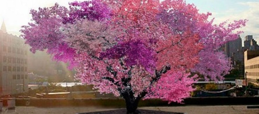 Čudo: Na drvetu raste 40 vrsta voća!