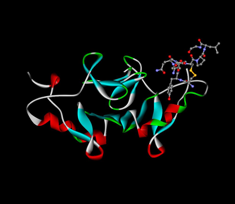 3D model hormona
