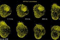 Revolucionarni mikroskop snima u 3D