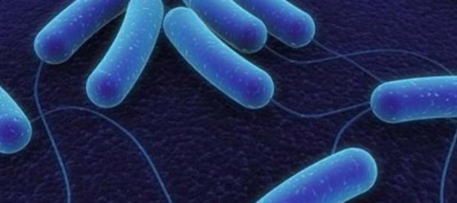 Bakterije koje pretvaraju ugljenik u čisto bio-gorivo  Edukacija