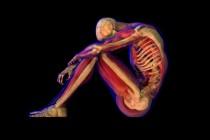 Kako su se ljudski delovi tela koristili kao lek?