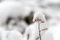 Još jedno ledeno doba – za 15 godina?
