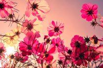 Eksplozija boja – usred pustinje