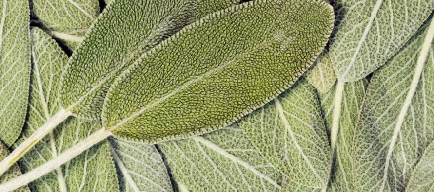 Biljka koja brine o našem zdravlju!
