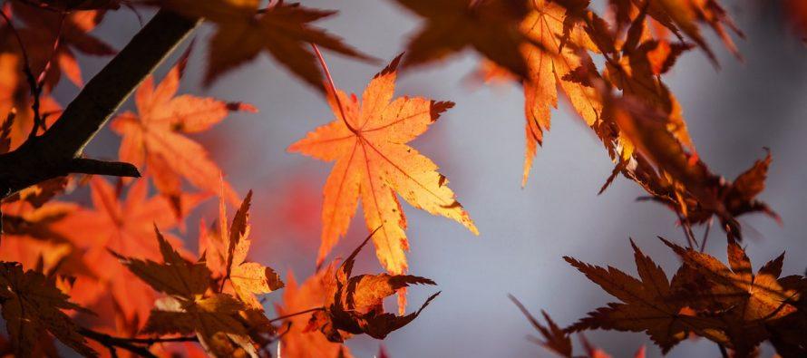 SUPER NAUKA: Zašto lišće žuti i opada?