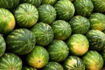Misterija rešena: Ovako se bira najbolja lubenica