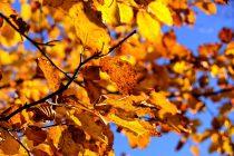 Stiže nam jesen!