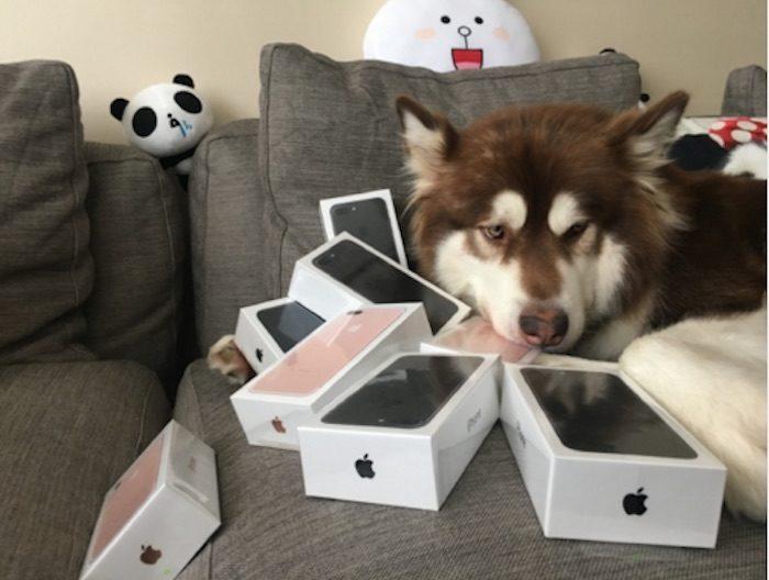 koko-dog2