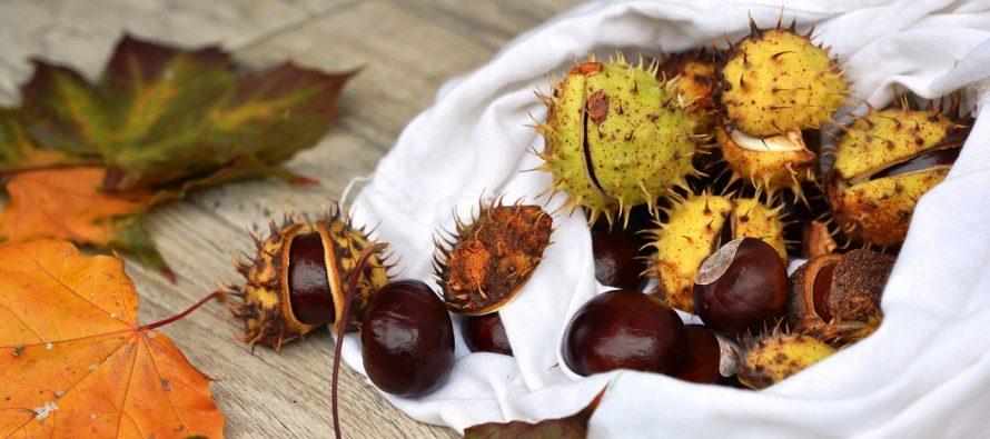 Jesenja poslastica – odličan izvor vitamina C