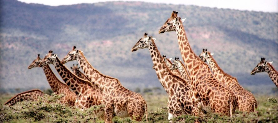 Ovo su najstariji sisari na svetu