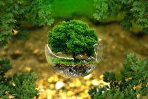 Konkurs za Veliku povelju Zelena planeta