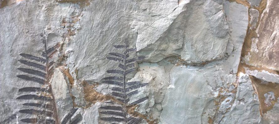 Pronađeni fosili stari 4 milijarde godina