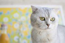 Dablin: Najbolji posao za ljubitelje mačaka