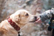 Otkriveno koliko je dugo pas čovekov najbolji prijatelj!
