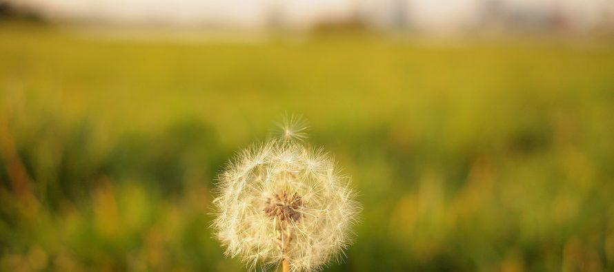 Spečite alergiju na prirodan način