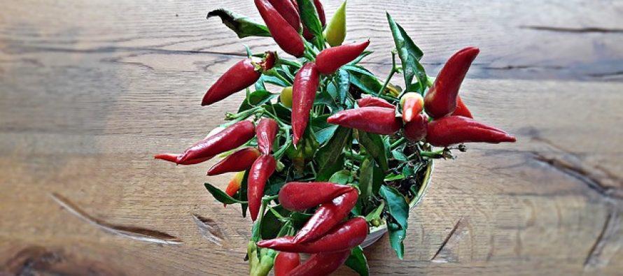 9 zdravstvenih benefita ljute papričice