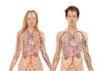 Otkriven novi ljudski organ koji može da promeni način lečenja kancera