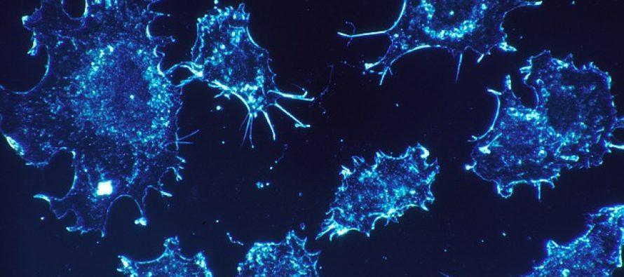Nova vakcina prepoznaje ćelije karcinoma?