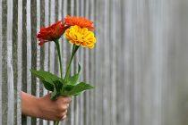Darežljivost nas čini srećnijima