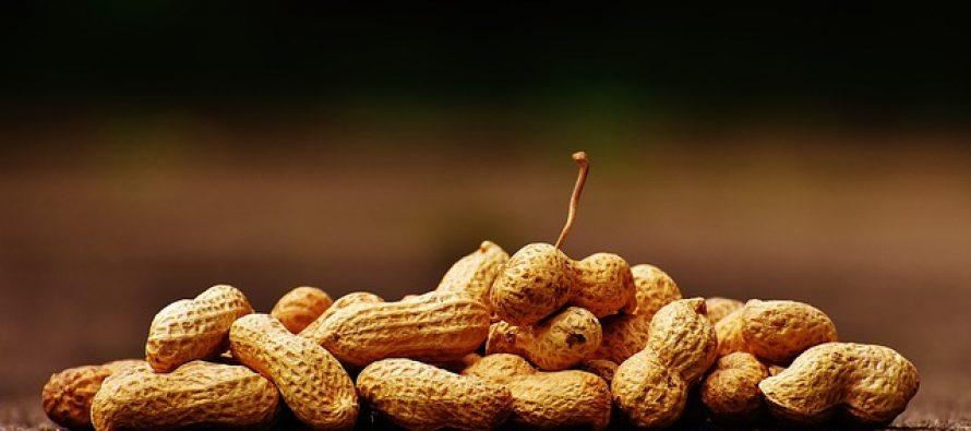 Verovali smo u pogrešno sve vreme: Kikiriki nije orašast plod!