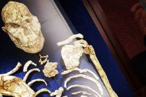 Otkriven najstariji hominin u istoriji