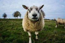 8 životinja koje su promenile istoriju