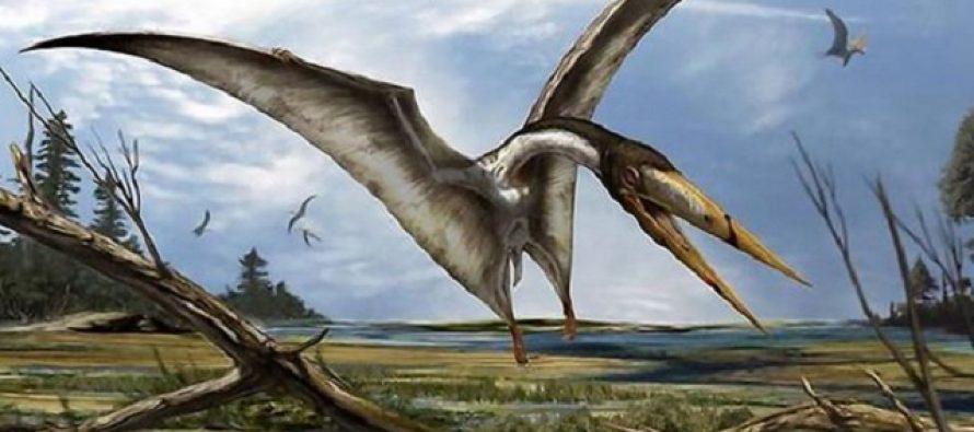 Pronađeno preko 200 savršeno očuvanih jaja pterosaura