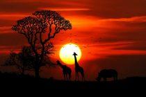 Nova otkrića arheologa: Ljudi su mnogo ranije migrirali iz Afrike?