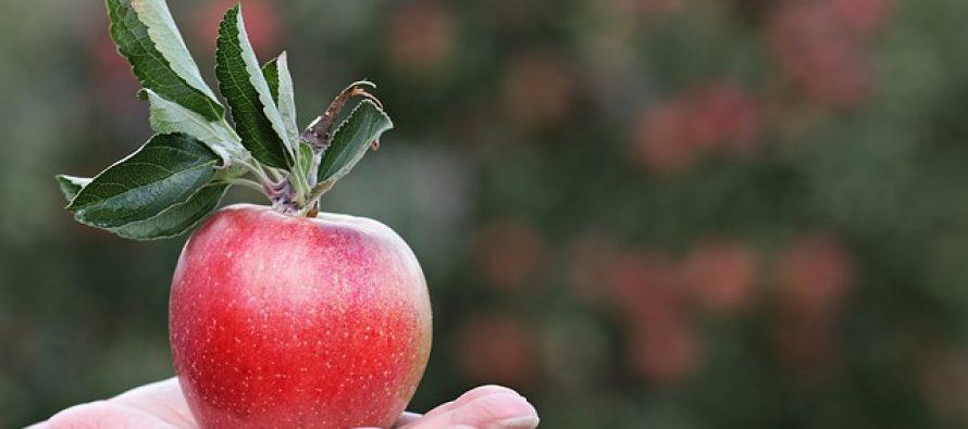 Svetski dan jabuka