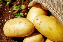 Kako iskoristiti krompir na pravi način?