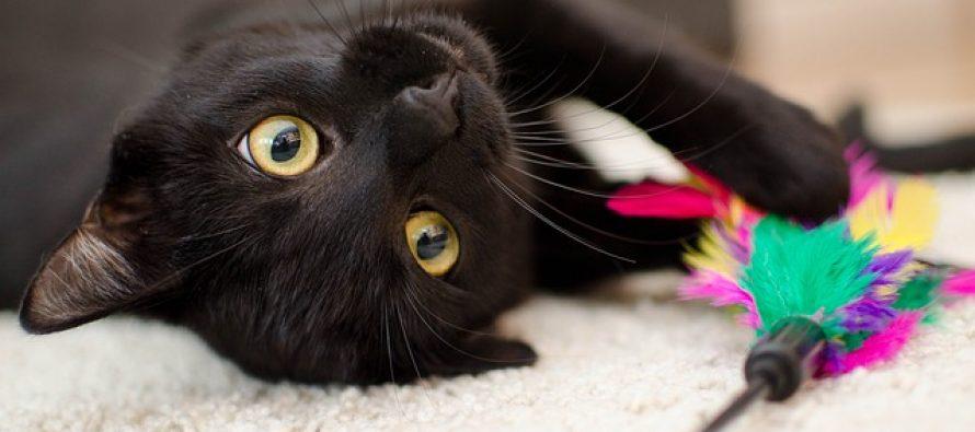 Činjenice o mačkama