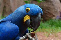 Upoznajte 10 najugroženijih vrsta biljaka i životinja na svetu