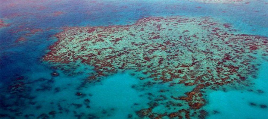 Australija nudi 1,6 milion dolara za najbolju ideju spašavanja Koralnog grebena!
