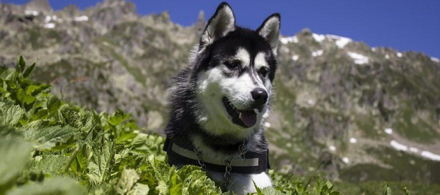 Omiljene rase pasa i fascinantna pozadina njihovih imena