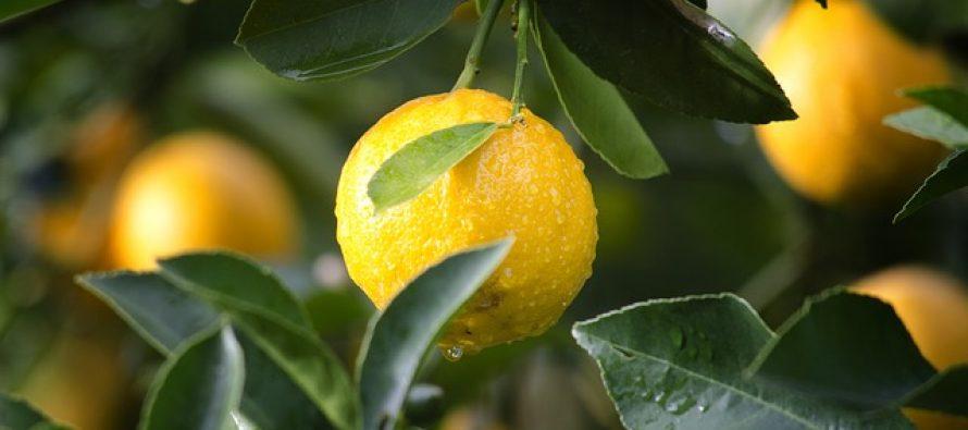 Zanimljiva istorija: Kako je limun oformio italijansku mafiju?
