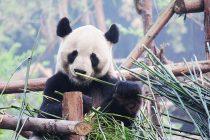 Dve godine fotografisao životinje koje će možda uskoro izumreti