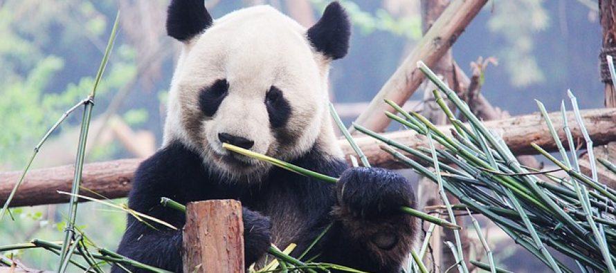 Zašto su neke životinje crno-bele?