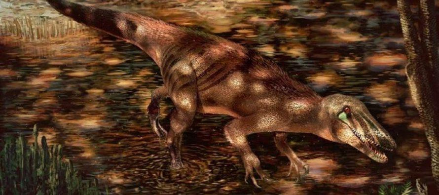 Otkrivena nova vrsta megaraptora