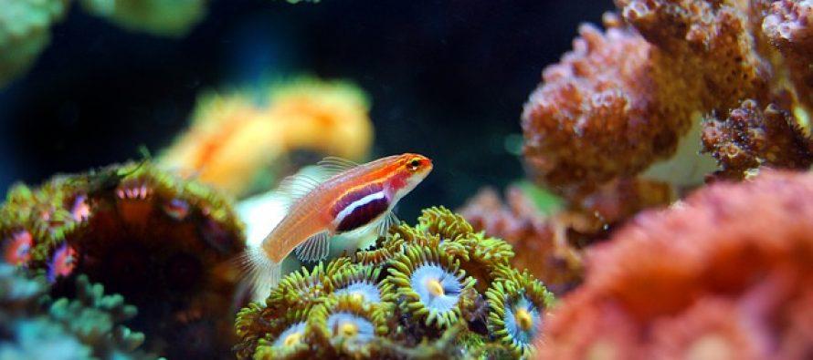 Uzrok masovnog izumiranja je vruća voda u okeanima?