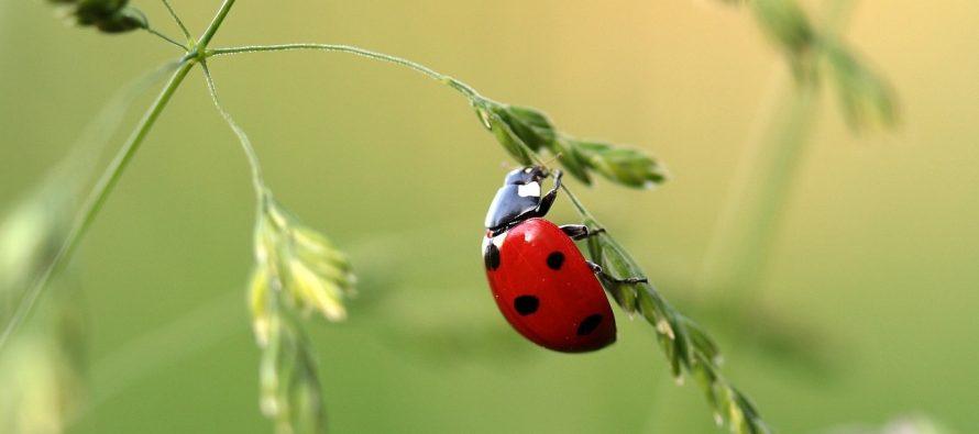 Neprijatne činjenice o ljupkim životinjama