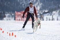 Demonstracioni sportovi Zimskih olimpijskih igara