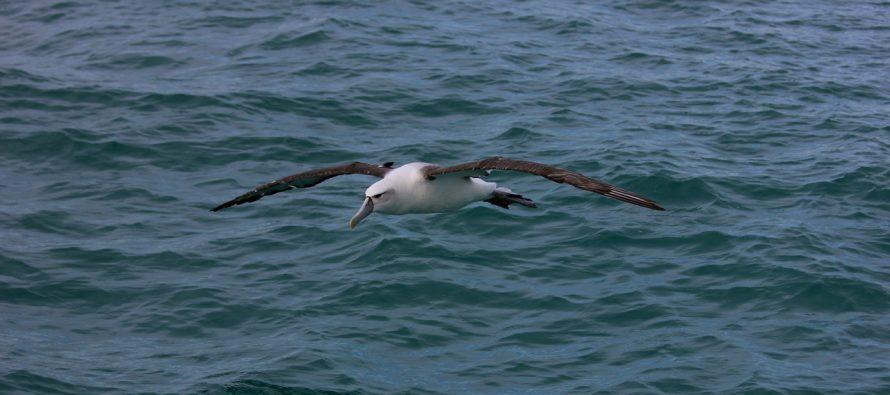 Najstarija ptica na svetu, položila jaje u 68. godini!