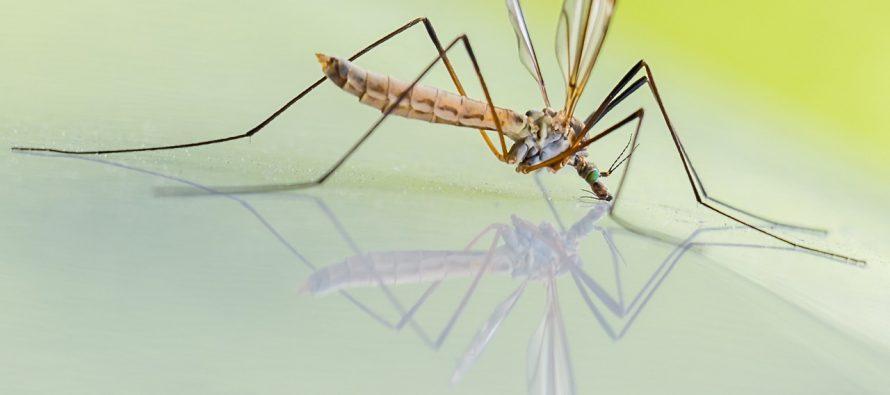 Kako zaustaviti širenje bolesti koju prenose komarci?