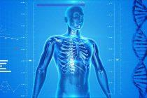Koji ljudski organ može da se regeneriše?