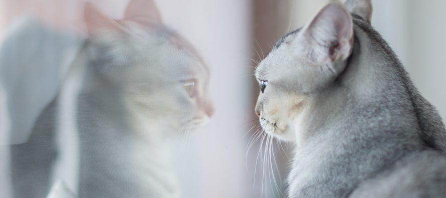 Kako to životinje reaguju na svoj odraz?