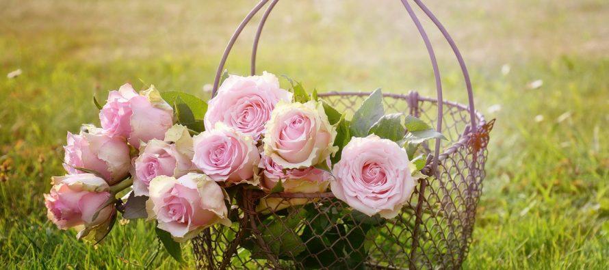 Koliko je kompleksan genom ruže?