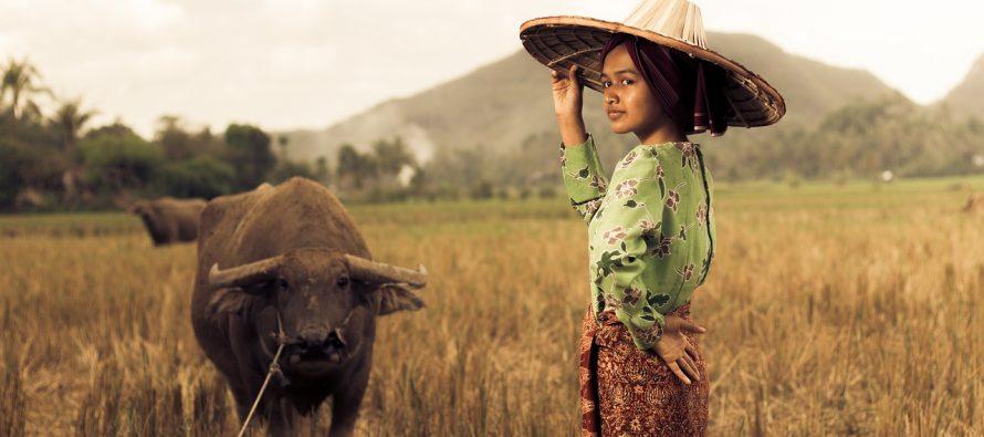 Najveći matrijarhat na svetu – Minangkabau