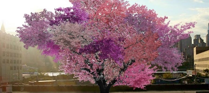 Ovo neobično drvo daje 40 različitih plodova
