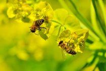 Poseduju li pčele matematičku sposobnost?