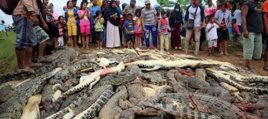 Ubijeno 300 krokodila zbog osvete